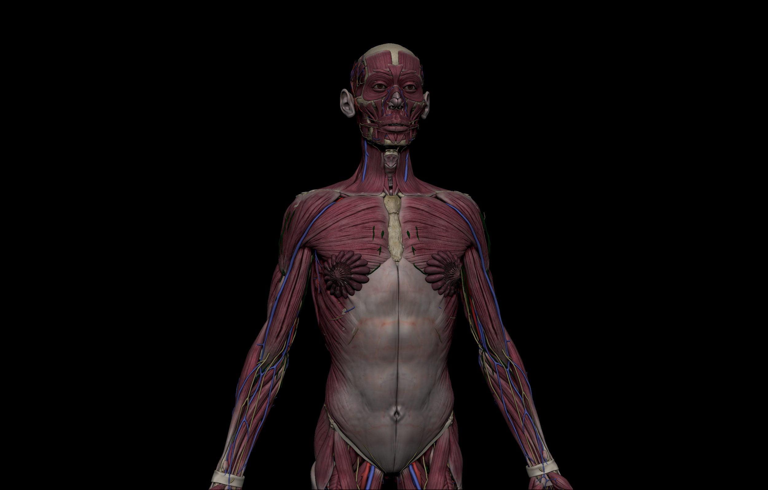 3 1 scaled SA Anatomy | Study Anatomy in 3D