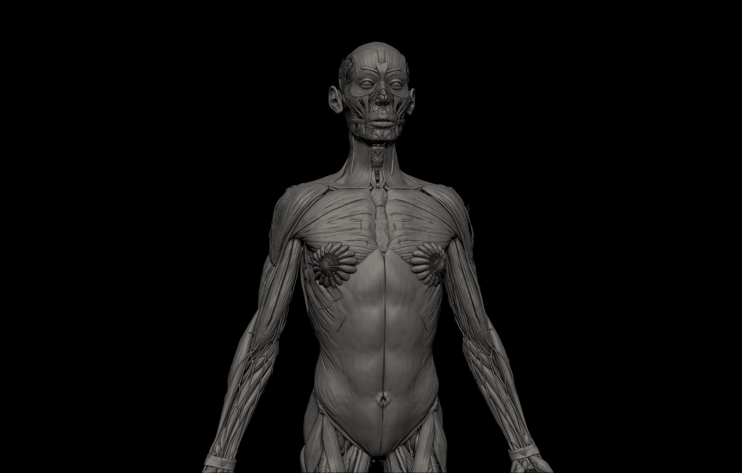 4 1 scaled SA Anatomy | Study Anatomy in 3D