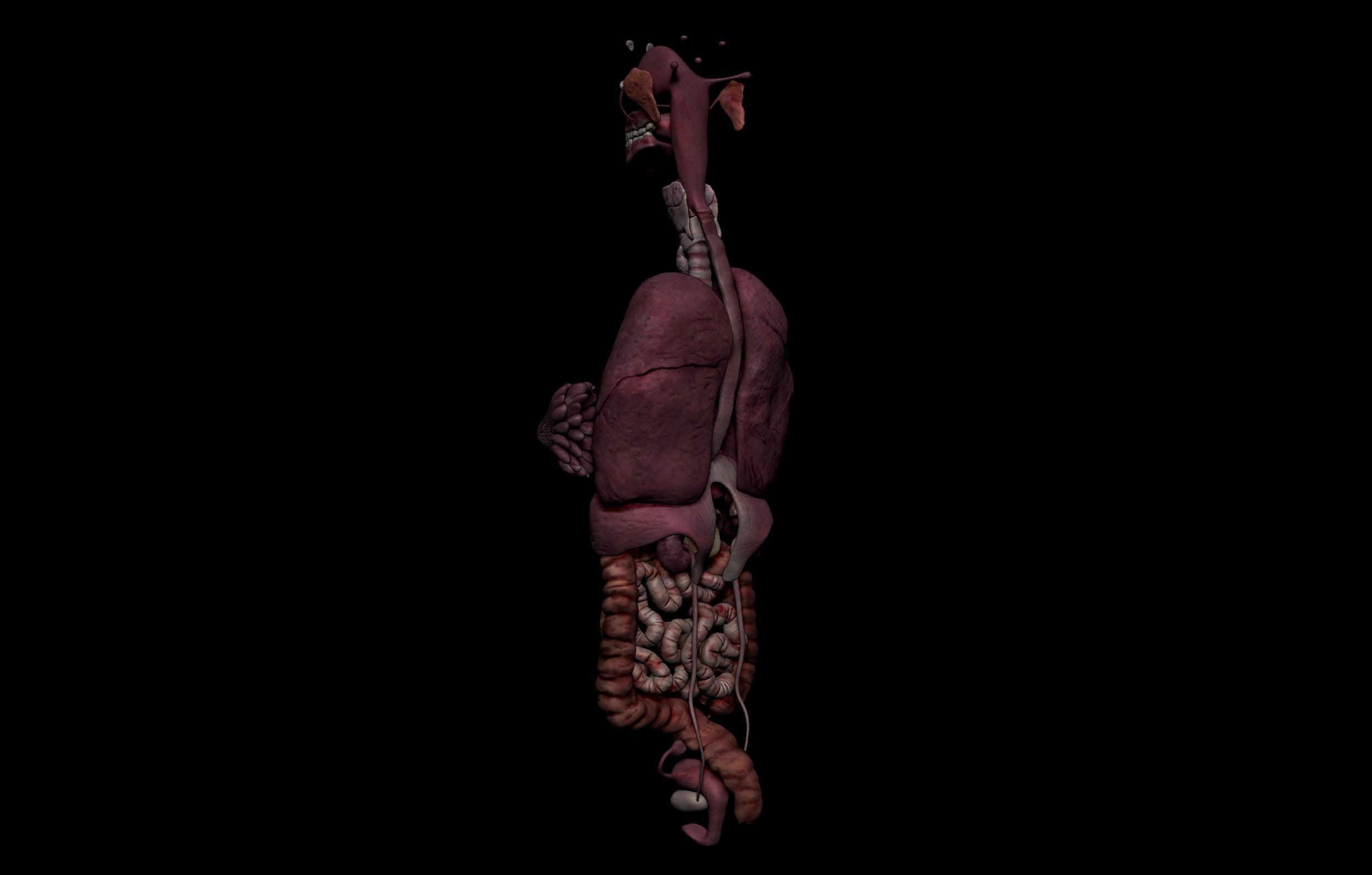 4 4 scaled SA Anatomy | Study Anatomy in 3D