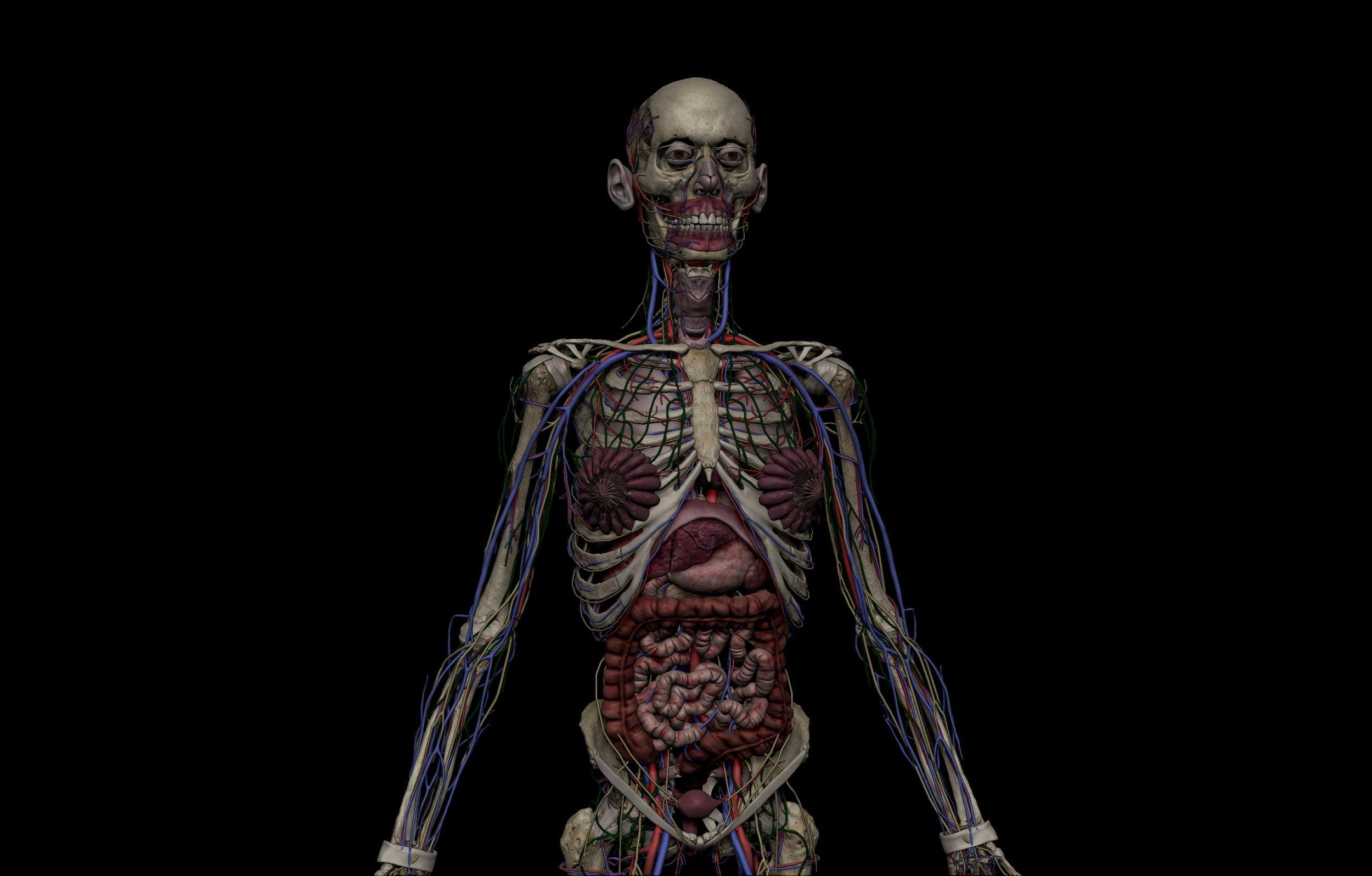 5 1 scaled SA Anatomy | Study Anatomy in 3D