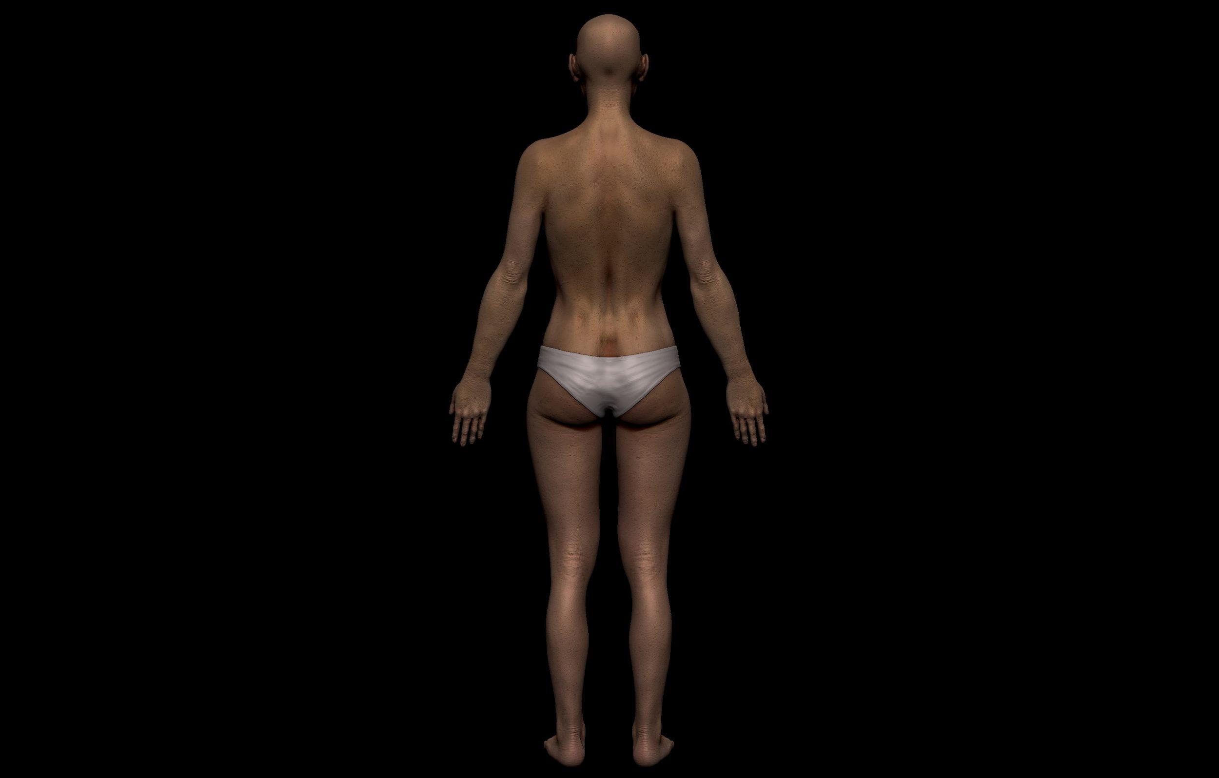 5 2 scaled SA Anatomy | Study Anatomy in 3D