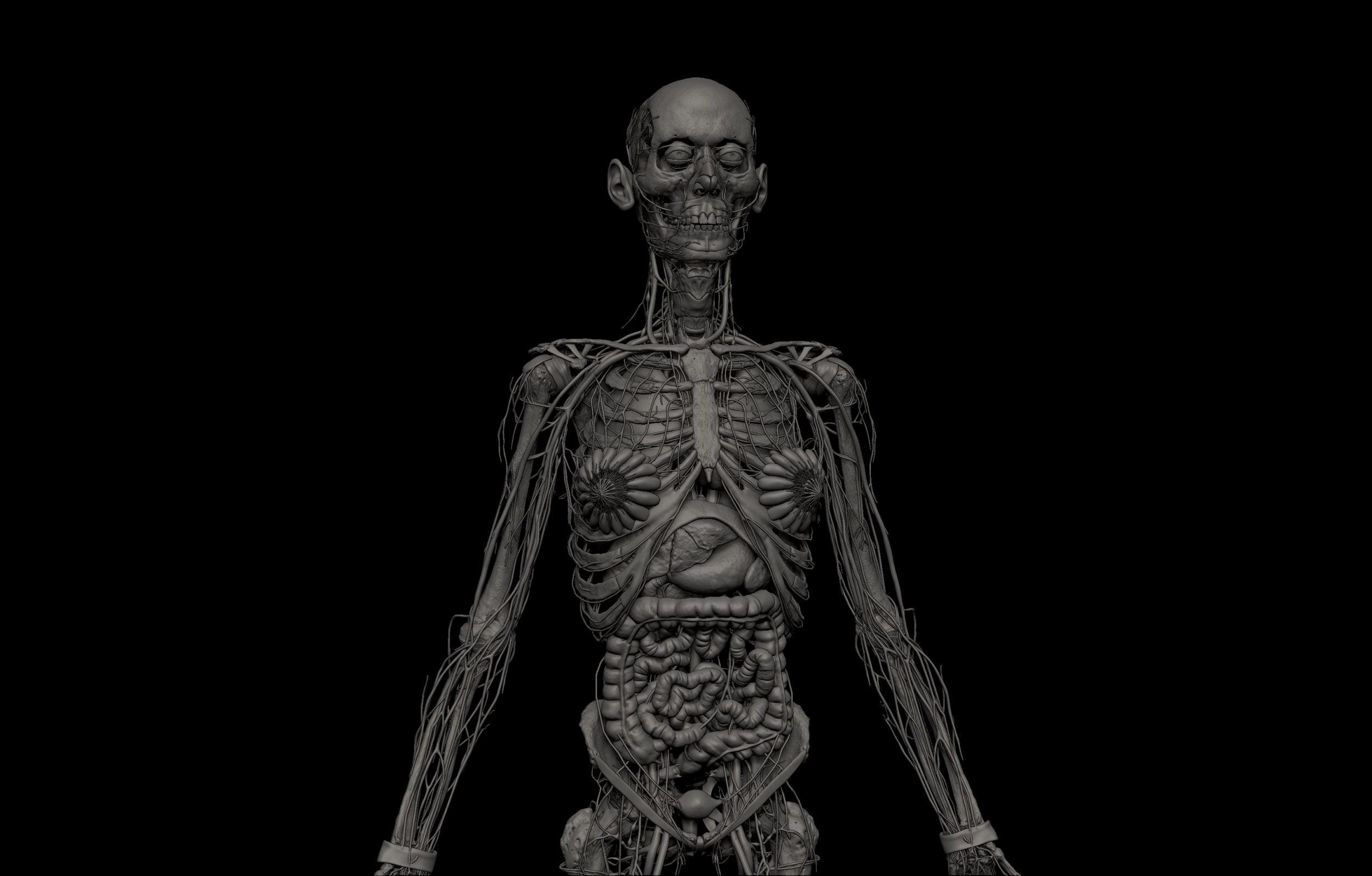 6 1 scaled SA Anatomy | Study Anatomy in 3D