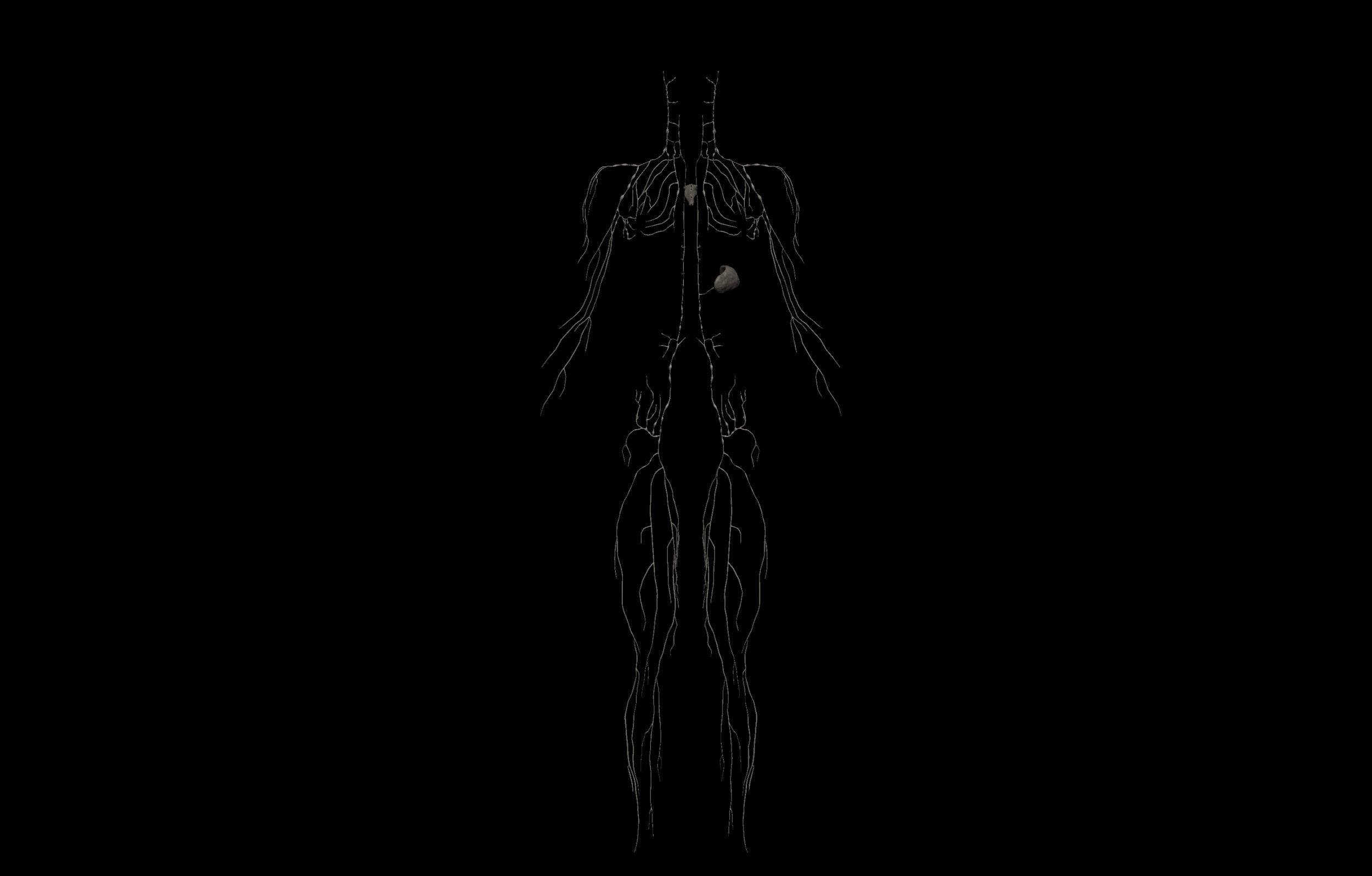 6 scaled SA Anatomy | Study Anatomy in 3D