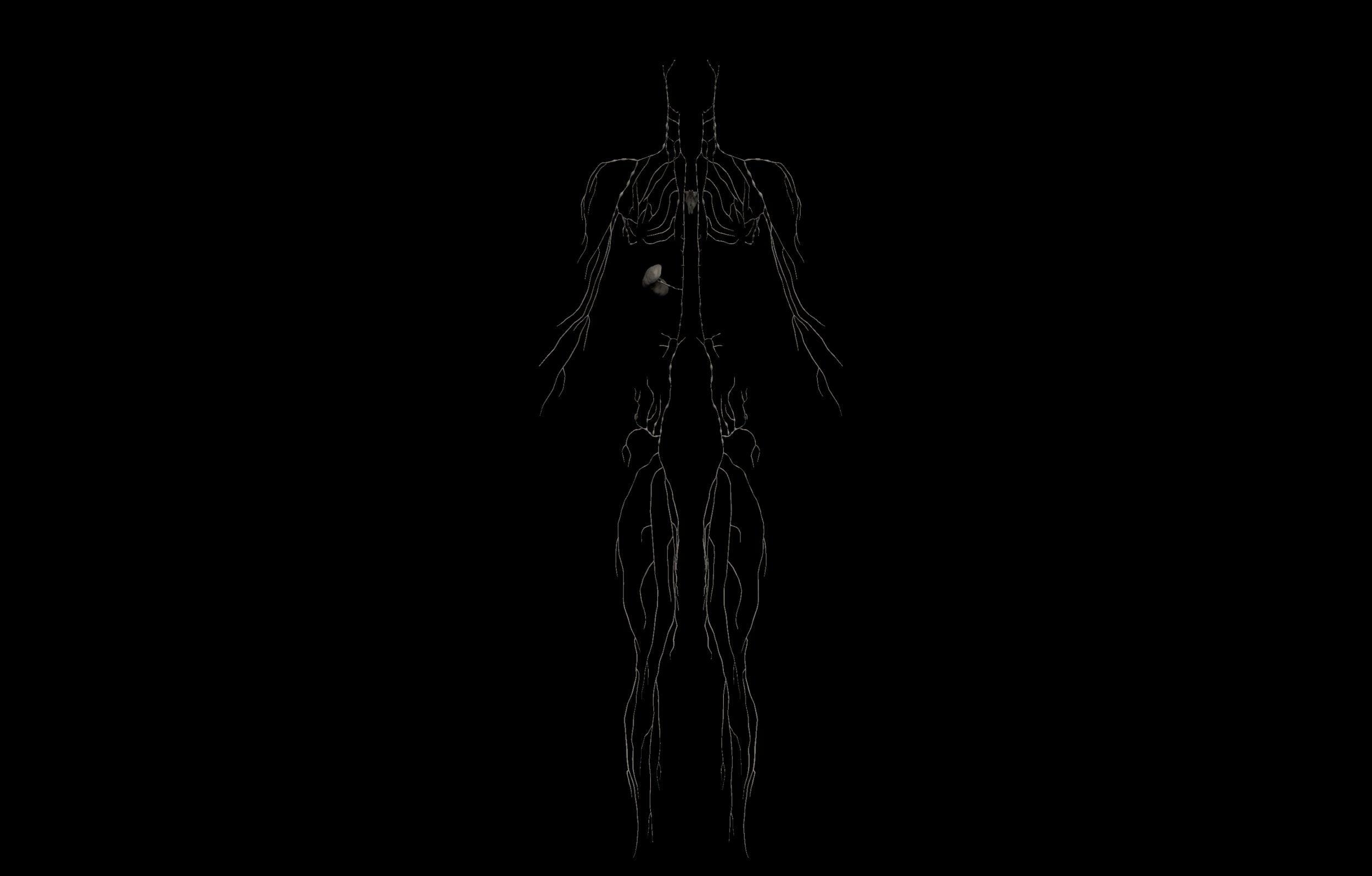 7 scaled SA Anatomy | Study Anatomy in 3D