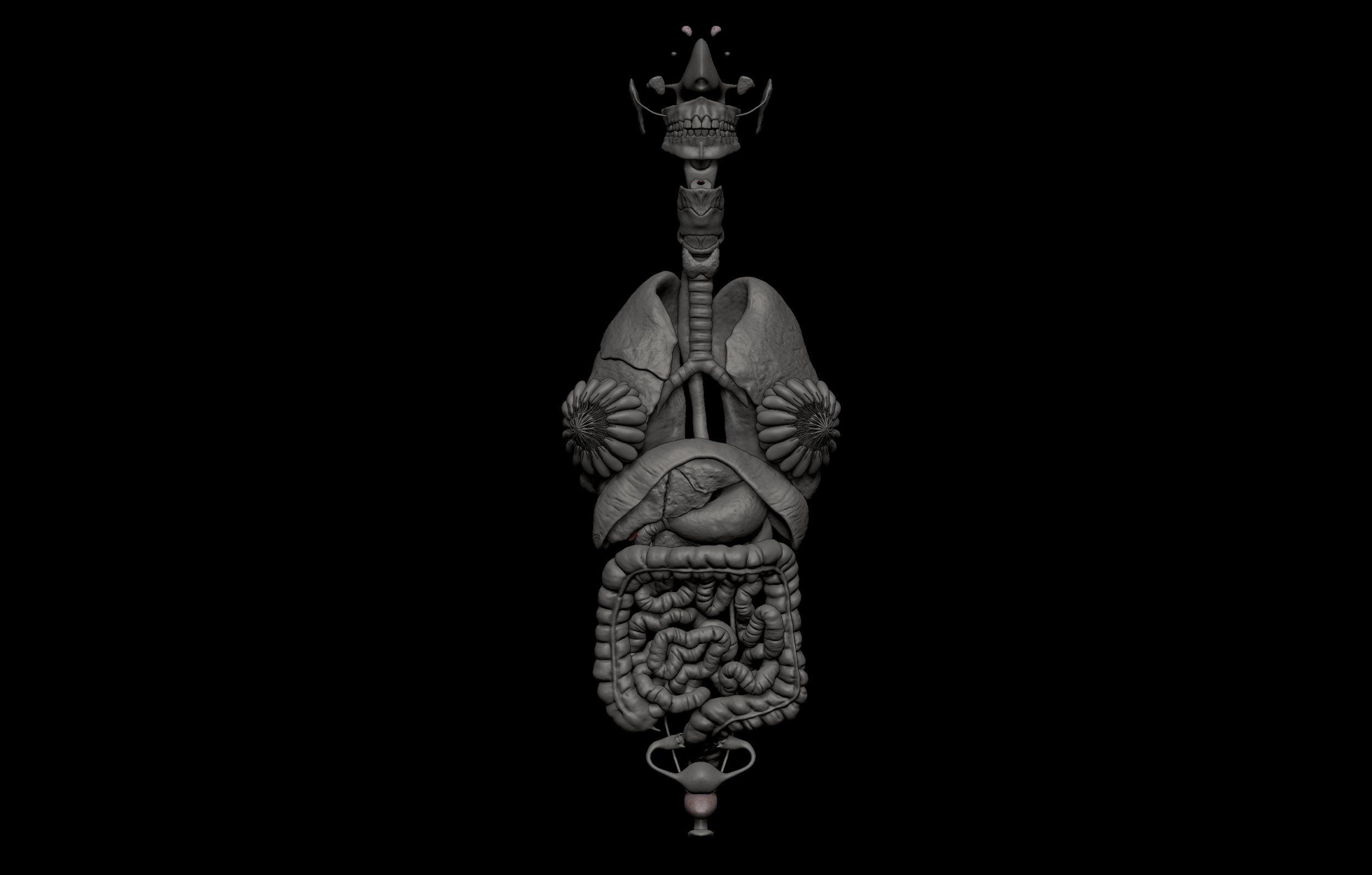 8 4 scaled SA Anatomy | Study Anatomy in 3D