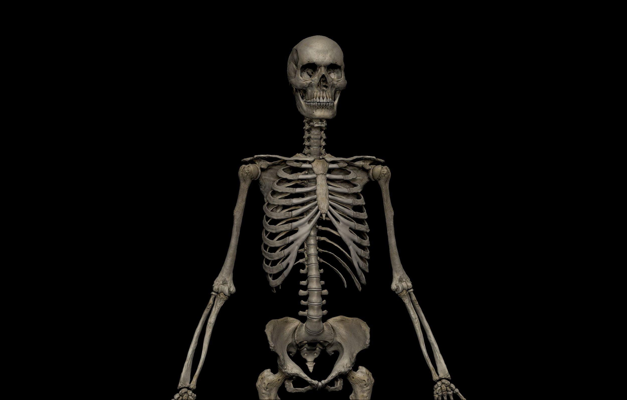 9 1 scaled SA Anatomy | Study Anatomy in 3D