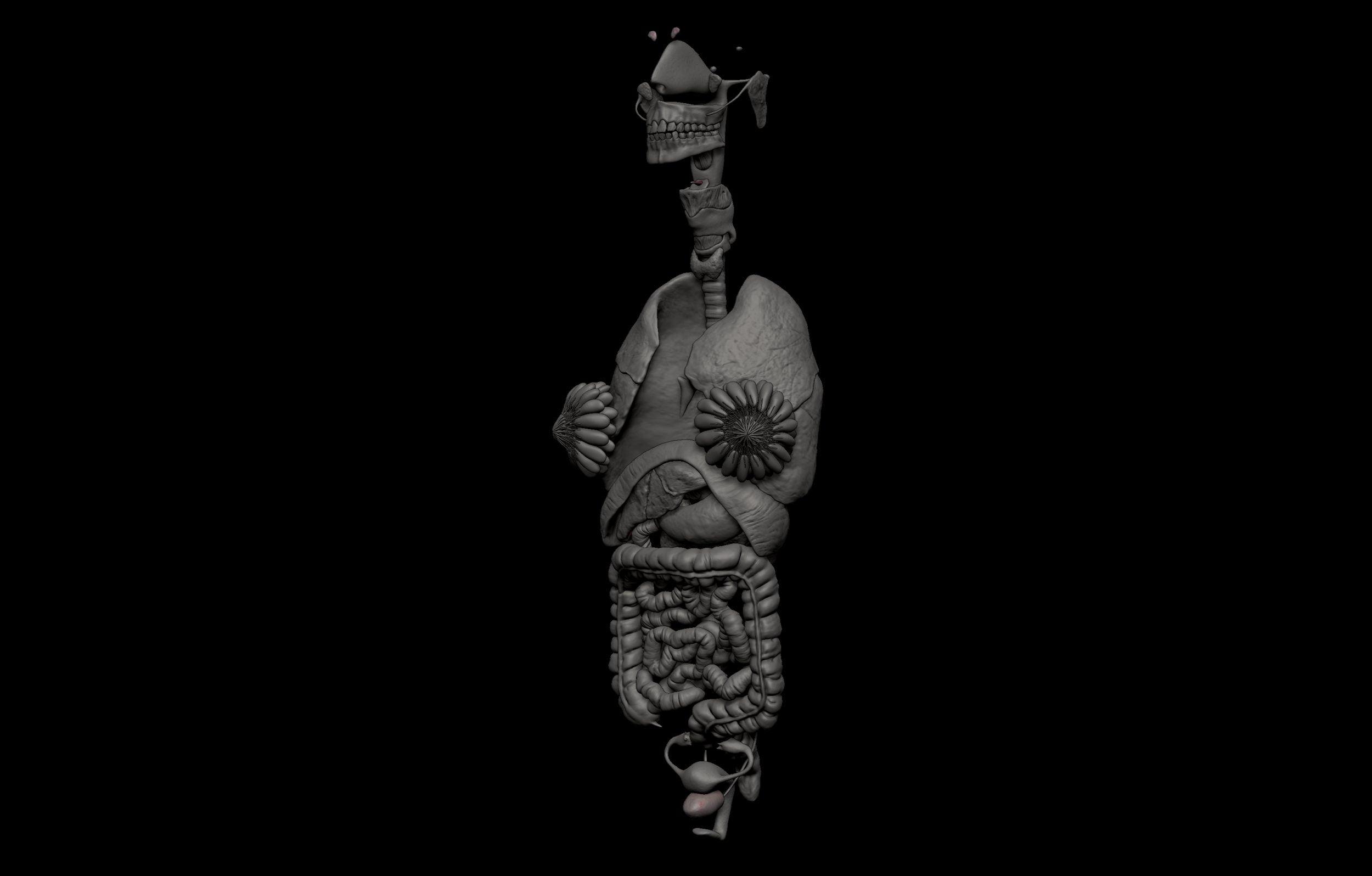 9 4 scaled SA Anatomy | Study Anatomy in 3D