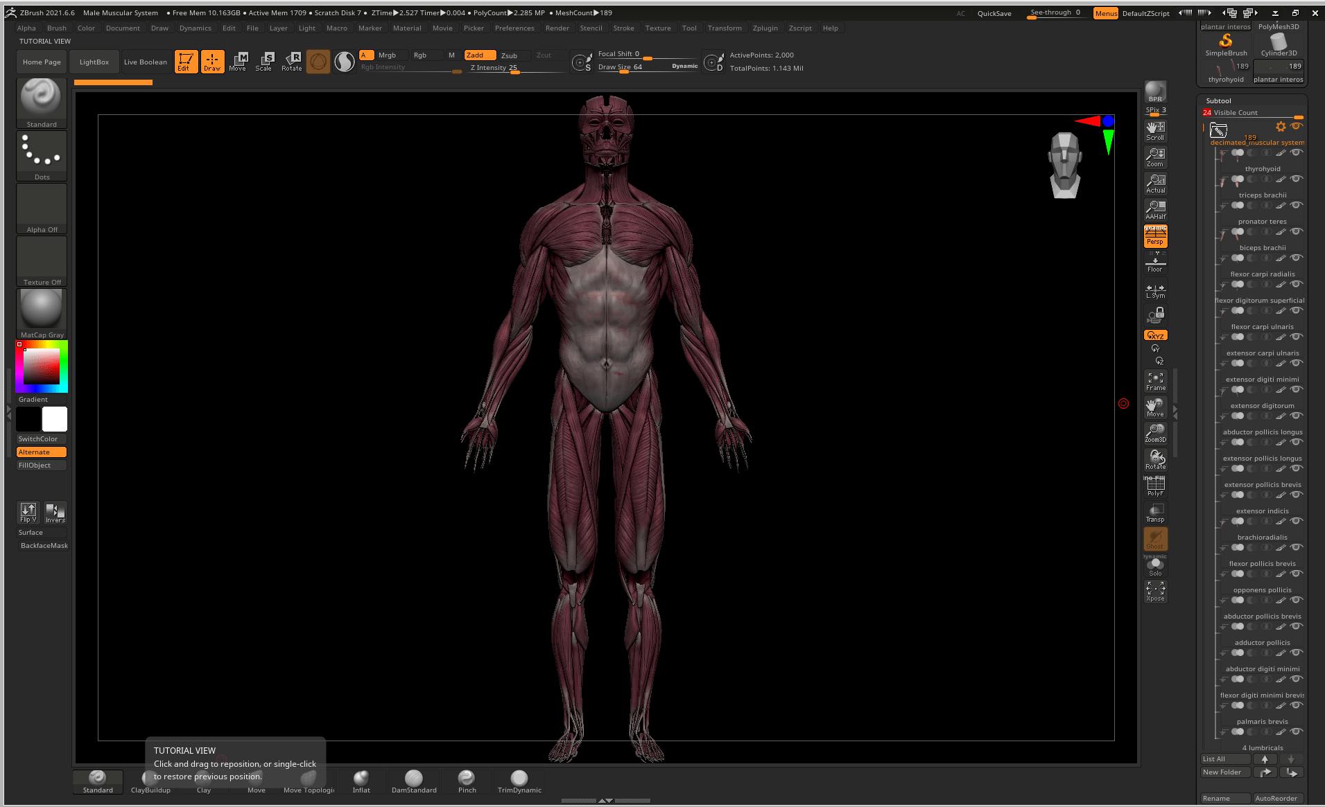 Capture 1 SA Anatomy | Study Anatomy in 3D
