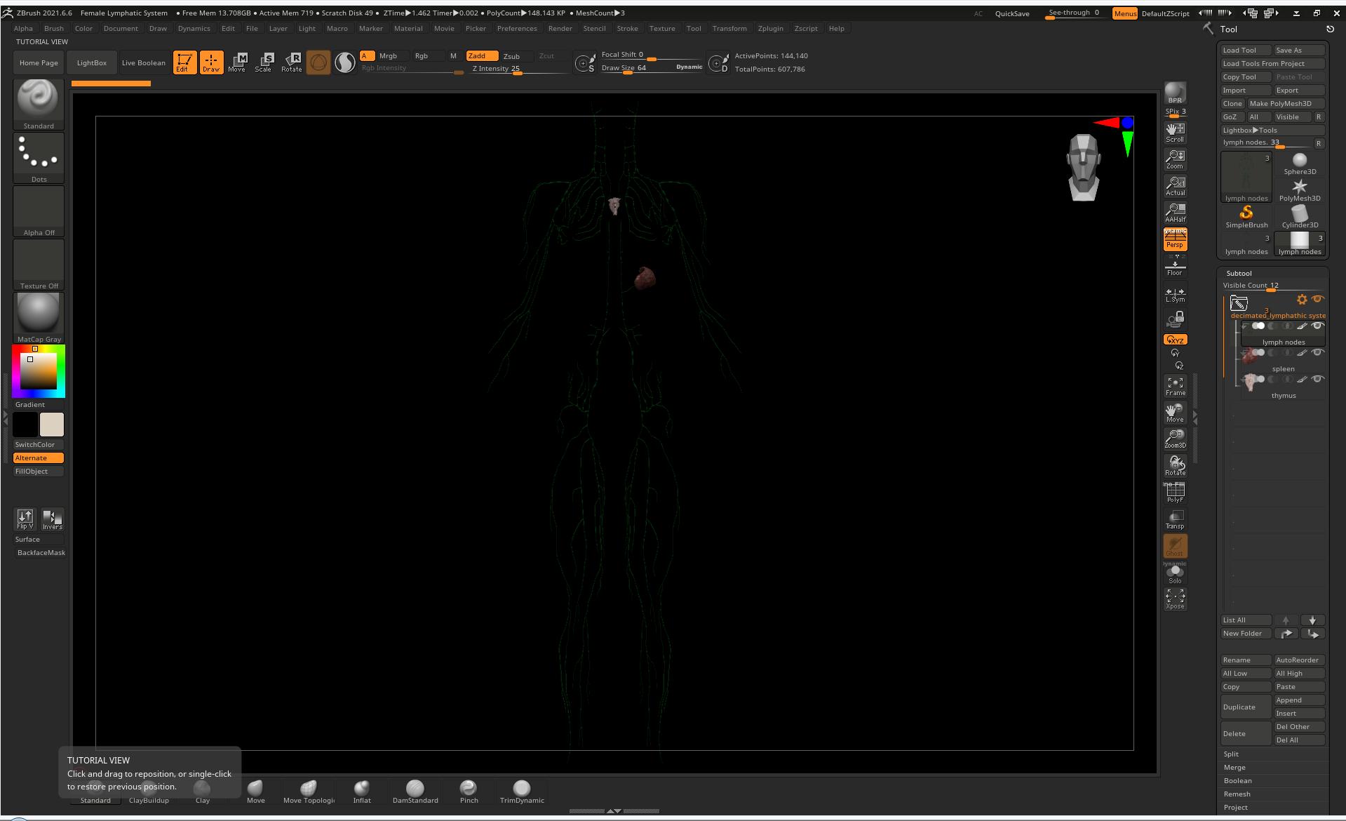 lymph 1 SA Anatomy   Study Anatomy in 3D