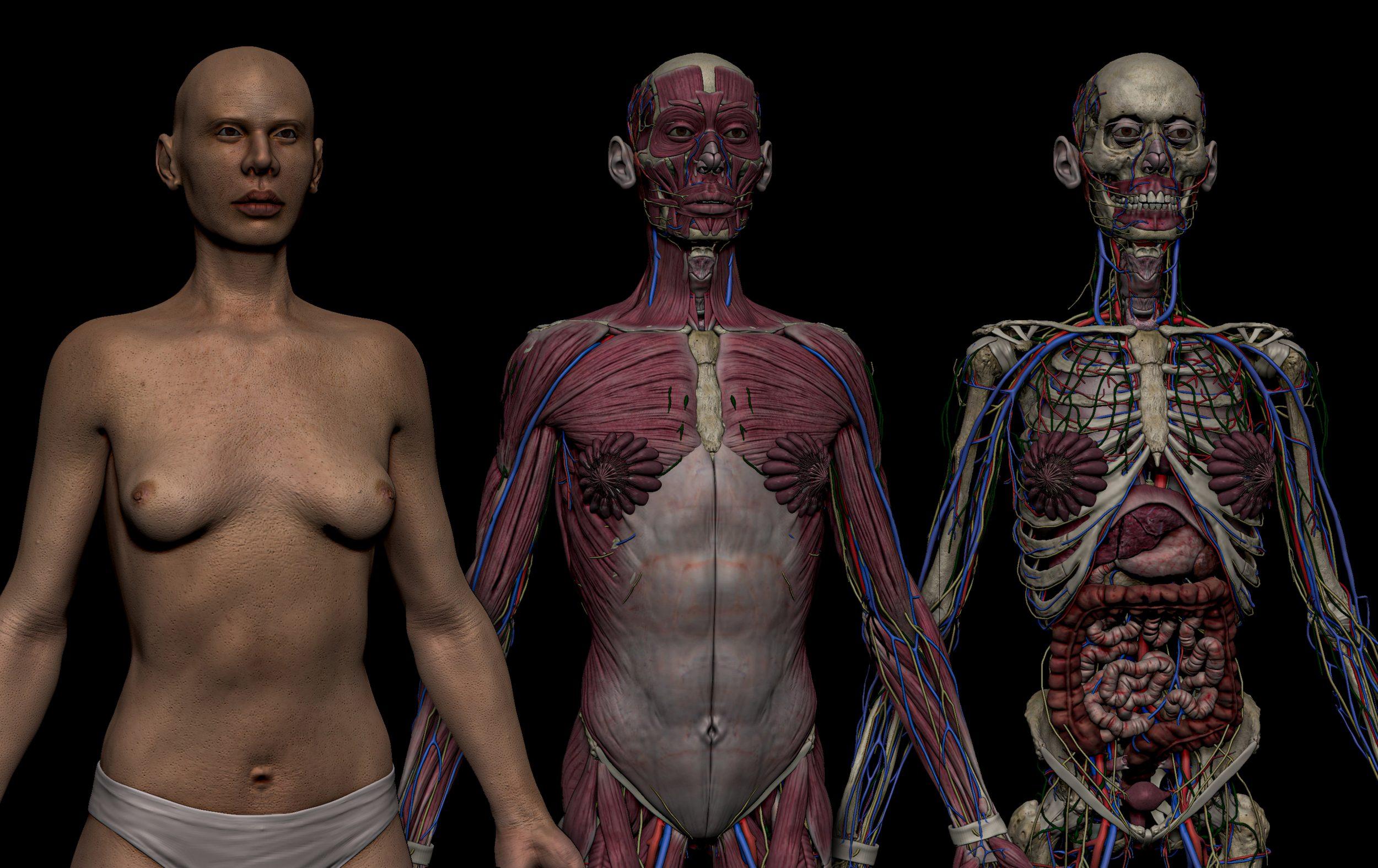 HD Female Complete Human 3D Anatomy Model