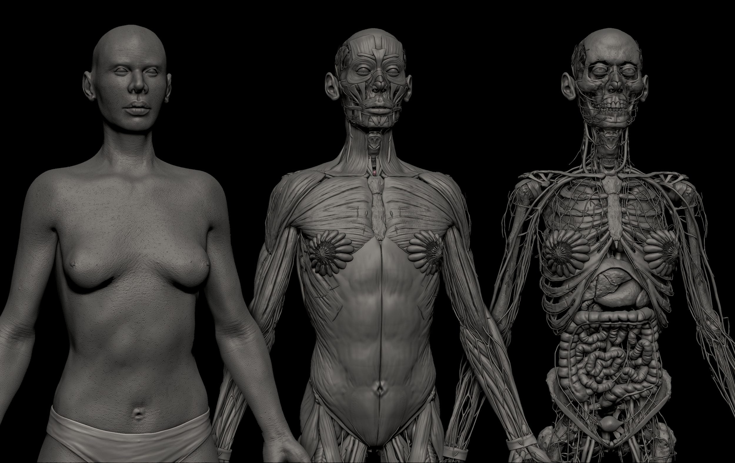 preview images 2 scaled SA Anatomy | Study Anatomy in 3D